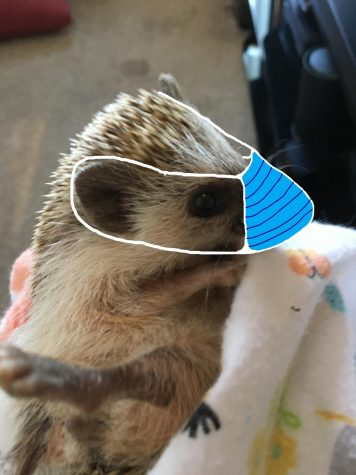 Photo of Penny the Hedgehog
