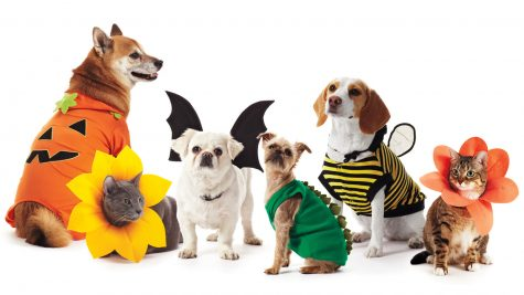 Check Out These Halloween Costumes for Pets